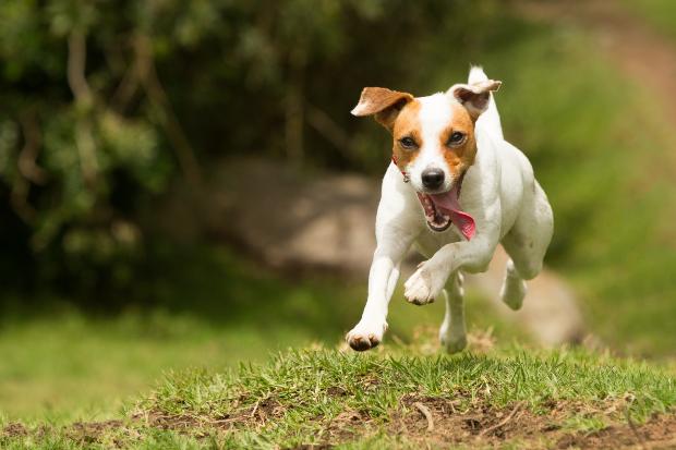 """Hund hört auf das Grundkommando """"Komm"""""""