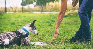 """Hund bekommt das Grundkommando """"Platz"""" beigebracht"""