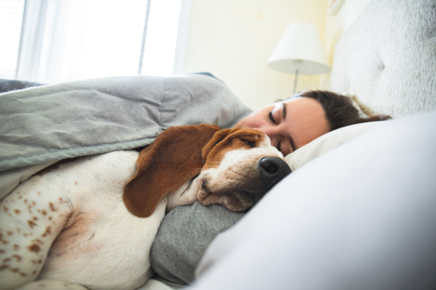 Hund schläft bei Frauchen im Bett