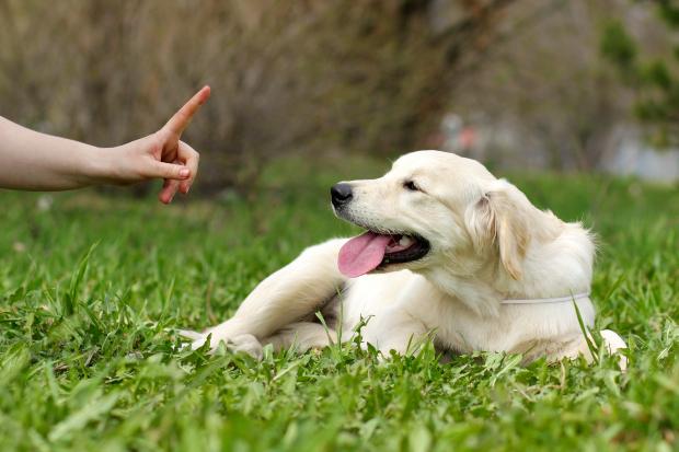 Junger Hund reagiert Herrchens Zeigefinger