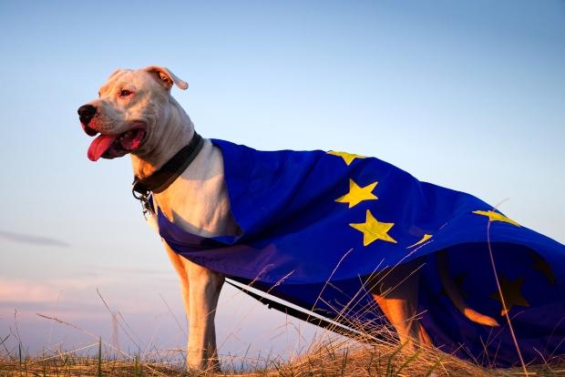 Hund in eine EU Fahne eingewickelt