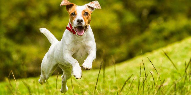Hund springt - Beschäftigungsspiele für Hunde sind wichtig
