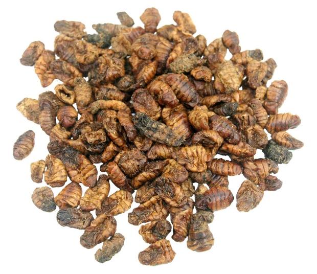 Seidenspinnerpuppen - Hundefutter mit Insektenprotein