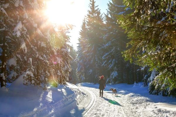 Frau und Hund machen einen Spaziergang im sonnigen Winterwald