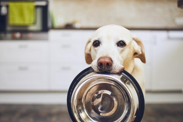 Fuer welche Hunde eignen sich Insektensnacks