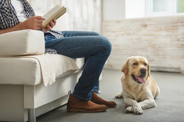 Hund entspannen auf Kommando