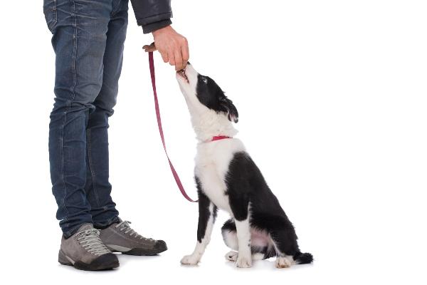 Hund erhaelt Belohnung koestliche-trainingsleckerchen