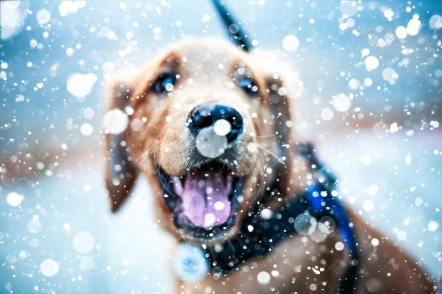 Hund umgeben von Schneeflocken
