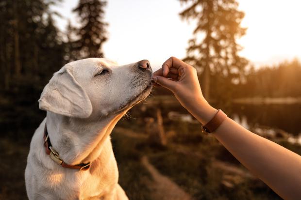 Hund wird gefüttert mit Fischhaut für Hunde