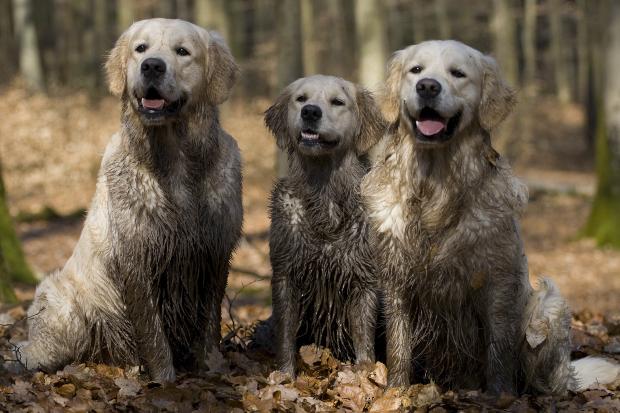 3 Welpen mit verdrecktem Fell - die Hunde können baden