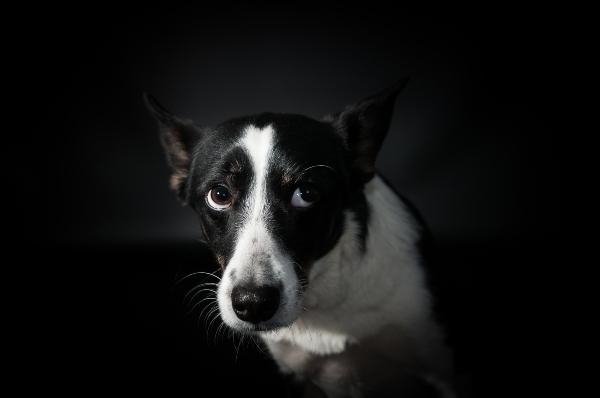 Warum muessen sich Hunde entspannen