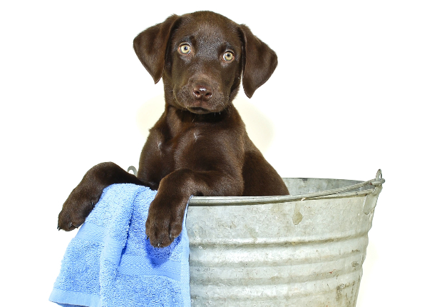 Welpe in Wanne für ein Bad - Hund soll baden
