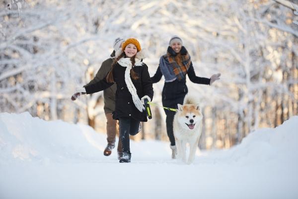 winterwanderung-mit-hund-regionen