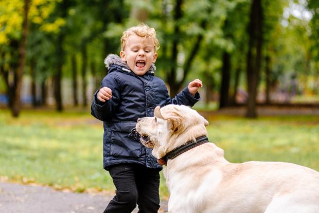 Kind ist von Hund erschreckt