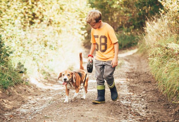 Junge führt Hund Gassi