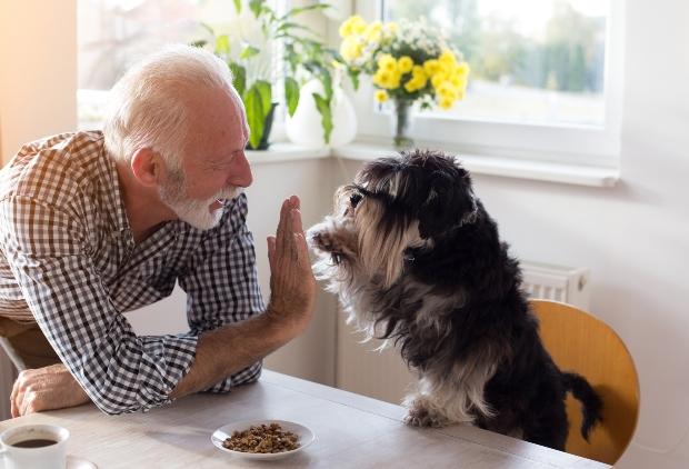 Mann und Hund geben sich ein High Five