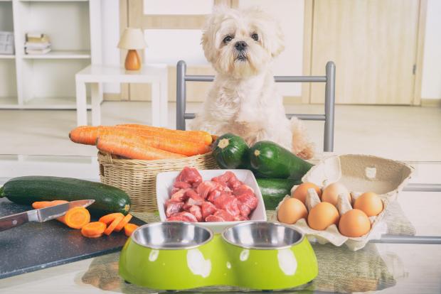 Junger Hund vor diversen Nahrungsmitteln - gute Welpenernährung