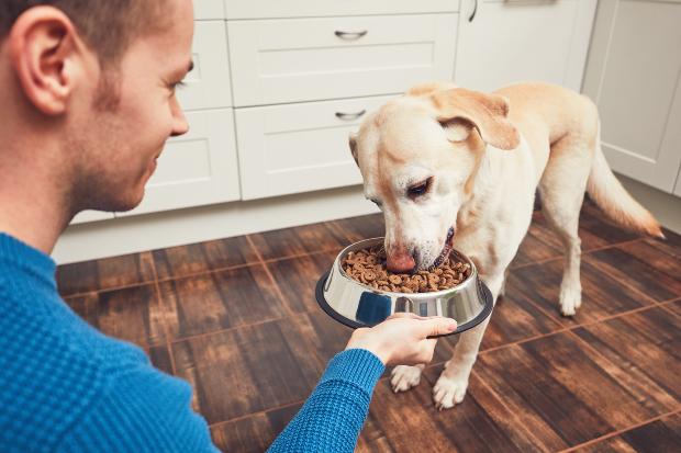Herrchen Füttert Hund