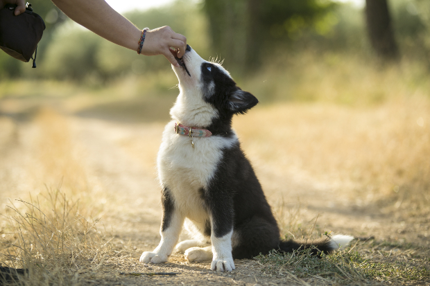 Hund bekommt Leckerchen - Kaninchenfleisch für Hunde