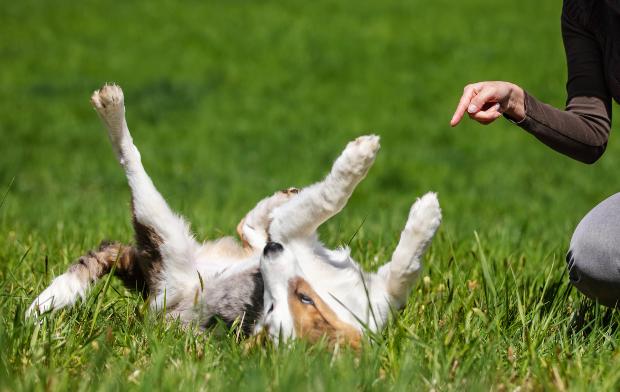 Frau trainiert ihren Hund