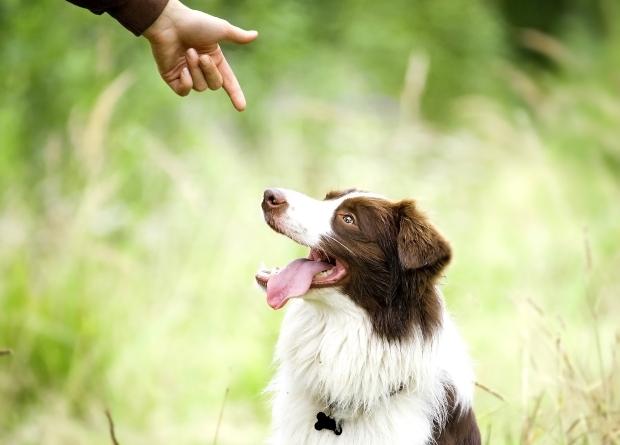 Mann zeigt mit der zur Pistole geformten Hand auf seinen Hund