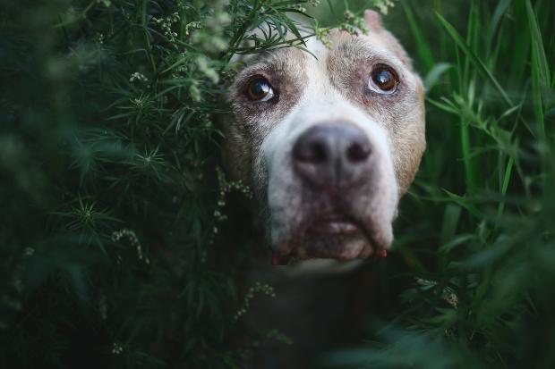 Hund umzingelt von Grünpflanzen