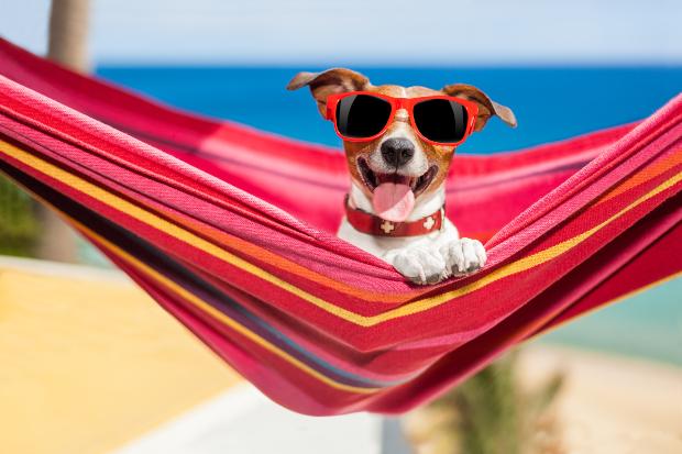 Hechelnder Hund mit Sonnenbrille sitzt in einer Hängematte