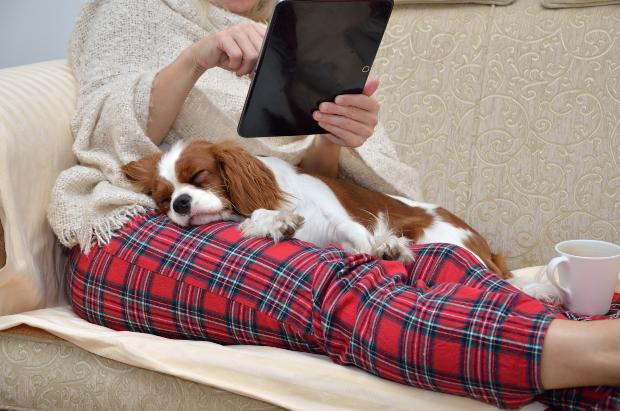 Hund liegt auf Frauchen auf der Couch