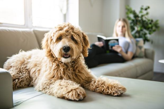 Ein Hund auf dem Sofa