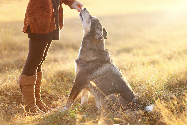 Rinderdörrfleisch für Hunde ist gesund und sehr beliebt