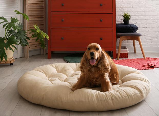 Hund auf seinem Hundebett - Hund abgewöhnen, auf Couch zu gehen