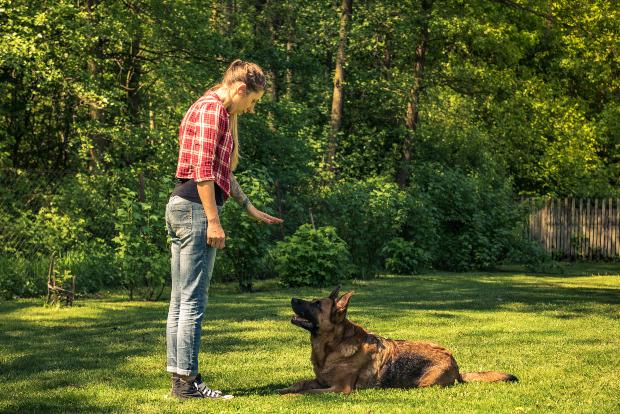 Frauchen bringt ihrem Hund Grundkommandos bei