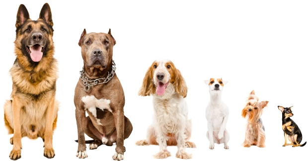 Große und kleine Hunderassen
