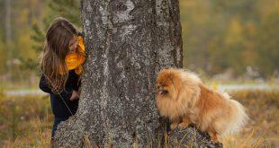Versteckspielen mit einem Hund