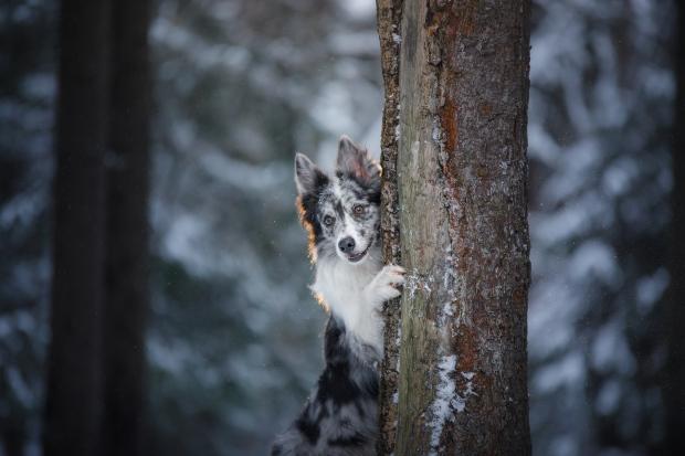 Hund versteckt sich hinter einem Baum