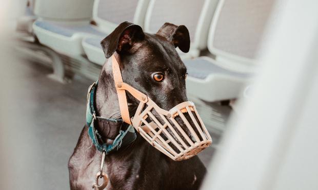 Hund mit Maulkorb in S-Bahn