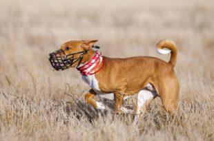 Hund mit Maulkorb auf Weide