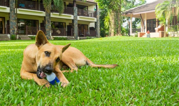 Hund knabbert an einer Flasche - Intelligenzspiele für Hunde