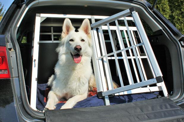 Hund in Käfigvorrichtung im Auto - Hund im Auto transportieren