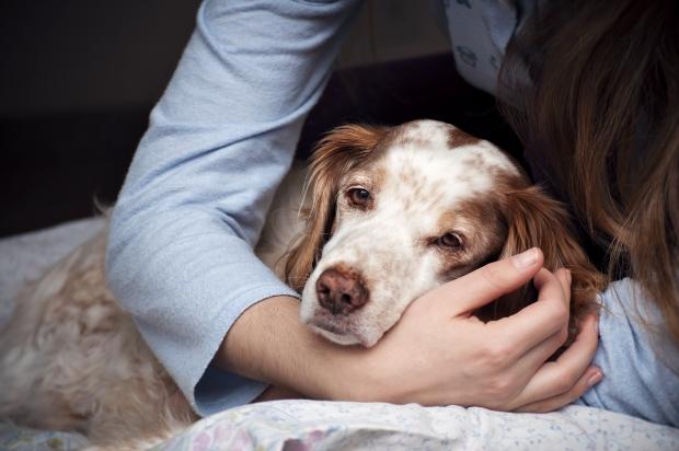 Hund mit Schmerzen wird gestreichelt