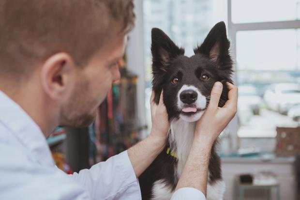 Hund beim Veterinär