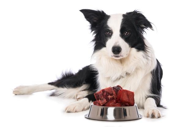 Hund vor Fressnapf - Qualität von Hundefutter und Kausnacks