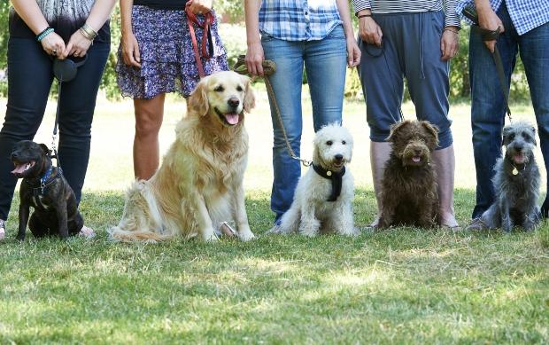 Gruppe von Hunden mit Herrchen