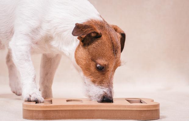 Hund schnüffelt in Holzspielzeug - Intelligenzspiele für Hunde