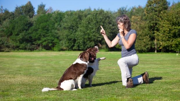 Frau mit zwei Hunden und einer Hundepfeife