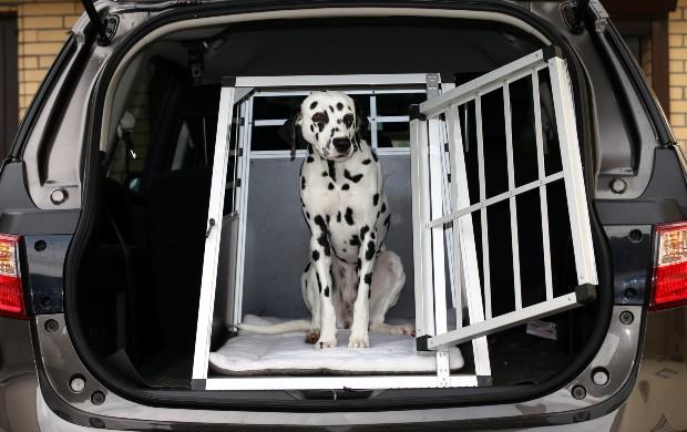 Hund im Kofferraum - Transportboxen im Auto
