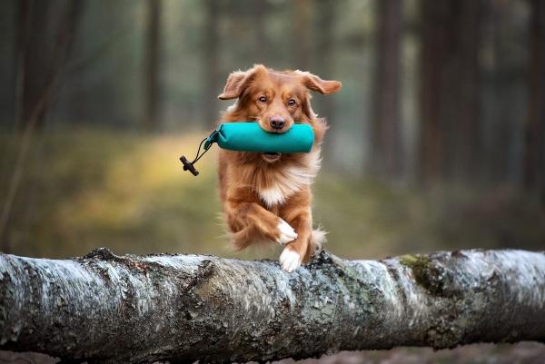 dummy-hund-alternative-gefahr-beim-stoeckchenspiel
