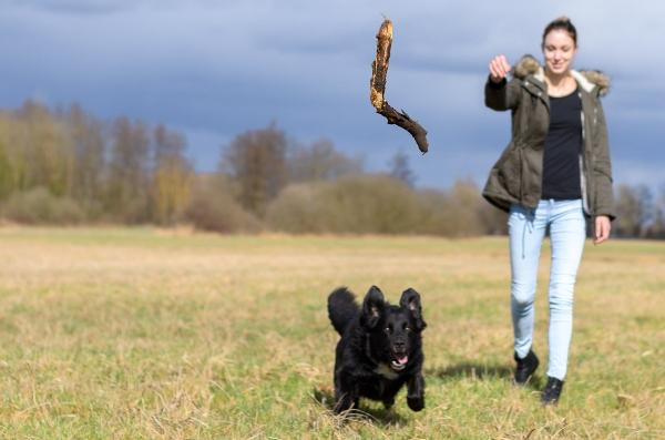 hund-stoeckchenspiel-frauchen-gefahr-beim-stoeckchenspiel