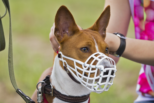 Frau legt Hund Maulkorb an