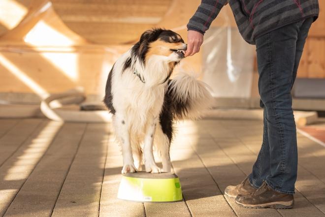 ein Hund wird mittels Hundekausnacks trainiert - Hund drehen beibringen
